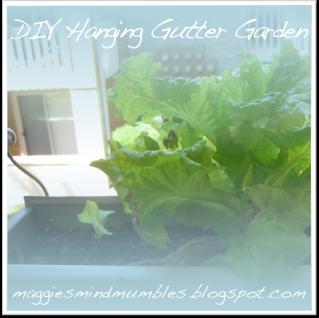 Maggie's Mind Mumbles//: Hanging Gutter Garden