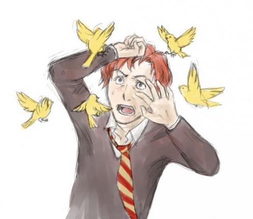 yellow canaries, ron weasley, hermione granger, lavender brown, harry potter, fan art