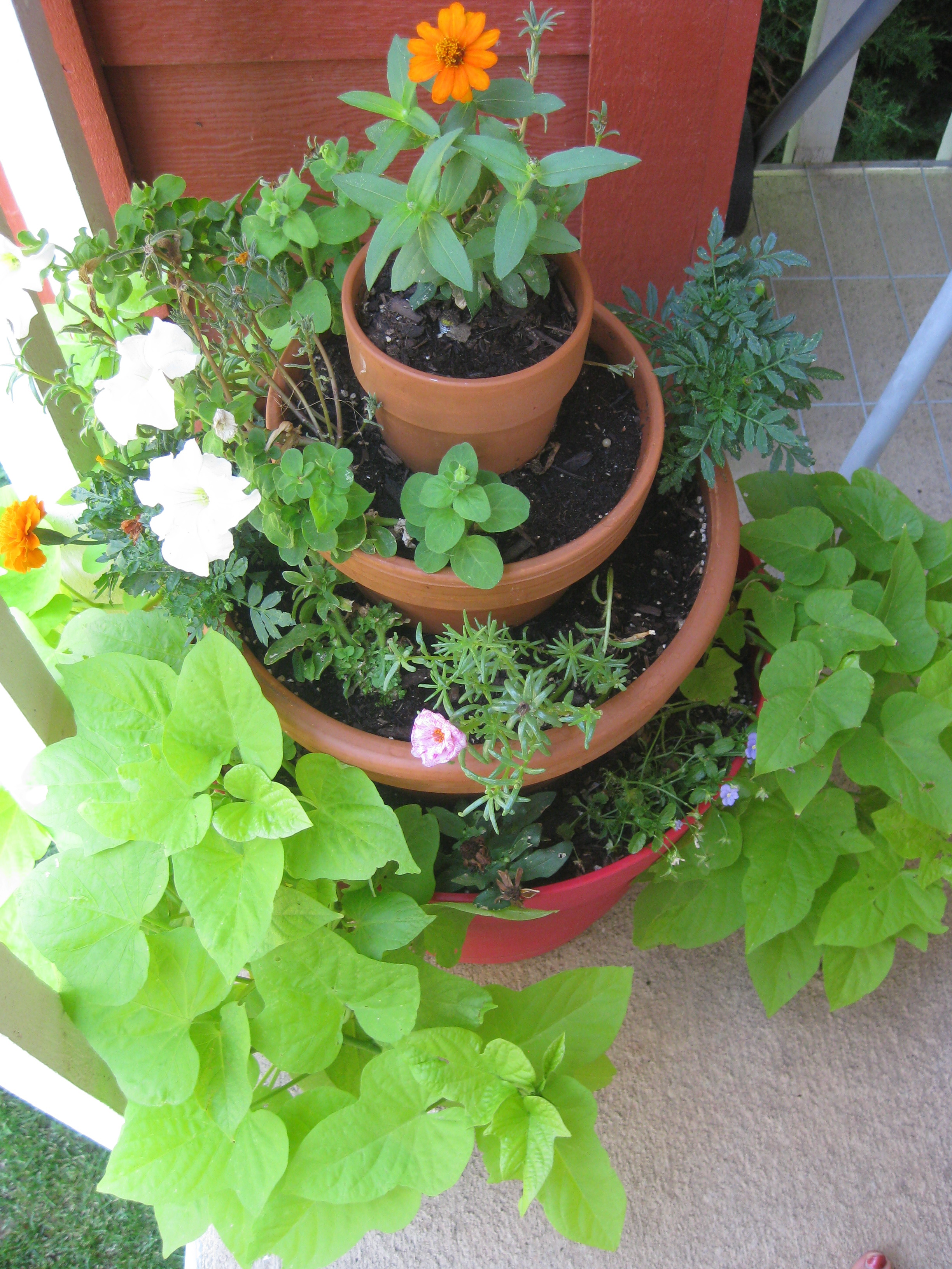 Maggie's Mind Mumbles//: Small Space Gardening on a Budget